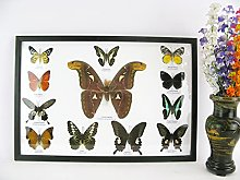asiahouse24 12 mariposas reales presentadas en