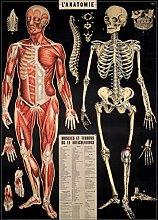 Cavallini L'Anatomie Papel de regalo