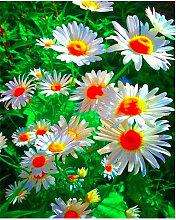 Diamond Flower Pintura de Margarita paisaje lleno