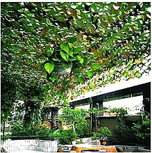 GAXQFEI Jardín Sunsn Net Camuflage Net, Desierto