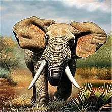 HJHJHJ Puzzle for Adults 3000 Piece (Elephant)