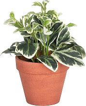 Kave Home - Planta artificial Aucuba con maceta