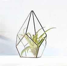 MINGZE Cristal terrario geométrico, para Plantas