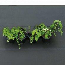 Nature Jardín vertical / Kit para hierbas y flores