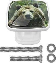 Perilla cuadrada para gabinete Animal oso pardo