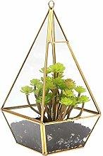 QHWJ Caja Planta de Vidrio, Pirámide geométrica