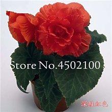 Semillas de flores de rosas genéricas en maceta