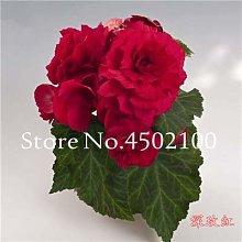 Sump Fresh 20 semillas de flores de rosa en maceta
