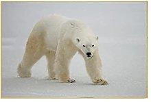 YABINGA Impresión en Lienzo Lindo Oso Polar
